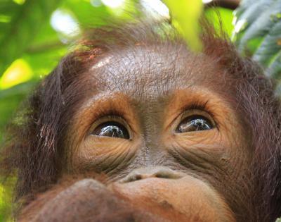Gratuitious ape photo